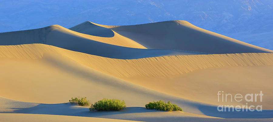 Bush Photograph - Mesquite Flat Sand Dunes In Death Valley National Park by Henk Meijer Photography
