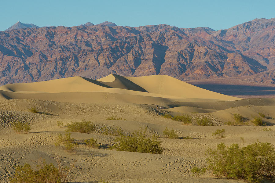 Mesquite Flat Sand Dunes by Matthew Irvin