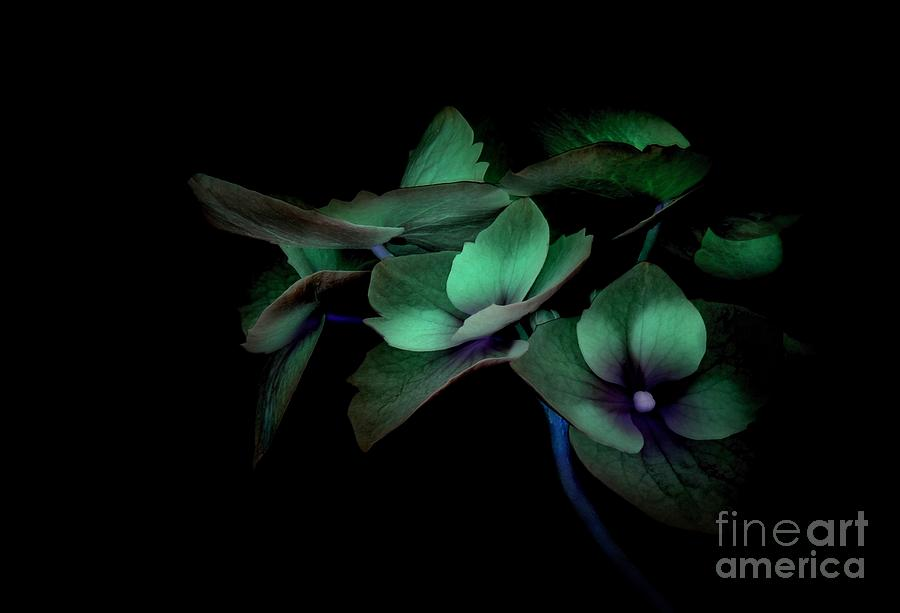 Nature Photograph - Midnight by Dan Holm