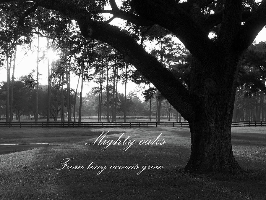 Mighty Oak Bw Text Photograph