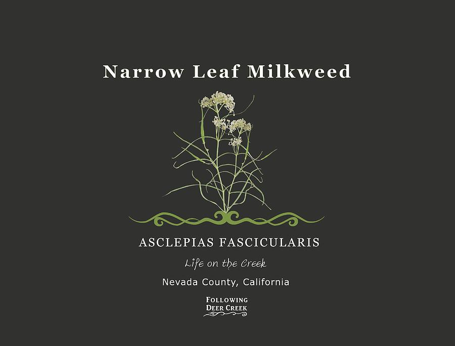 Milkweed by Lisa Redfern