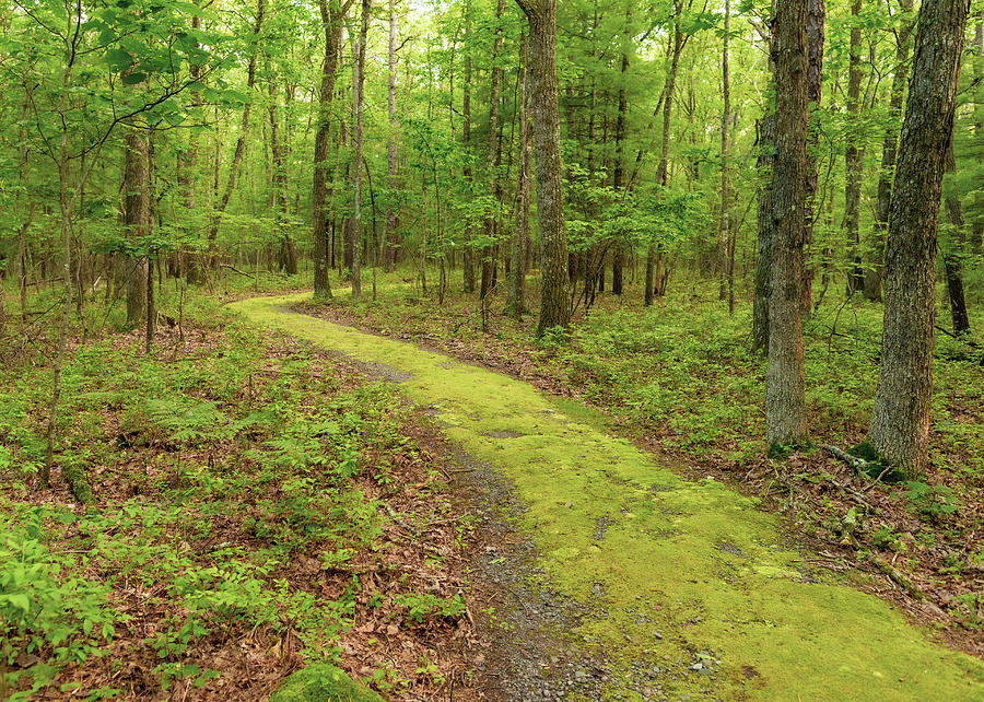 Minisink Battleground Park Trail Travel Photography by Amelia Pearn