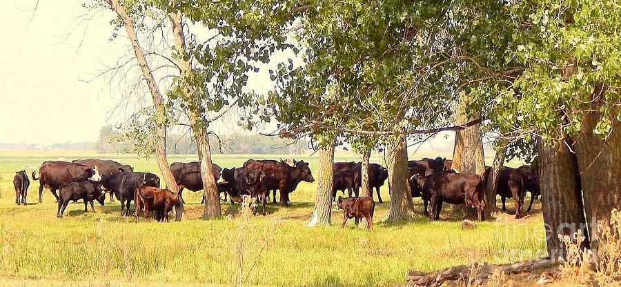 Minnesota Cows Photograph
