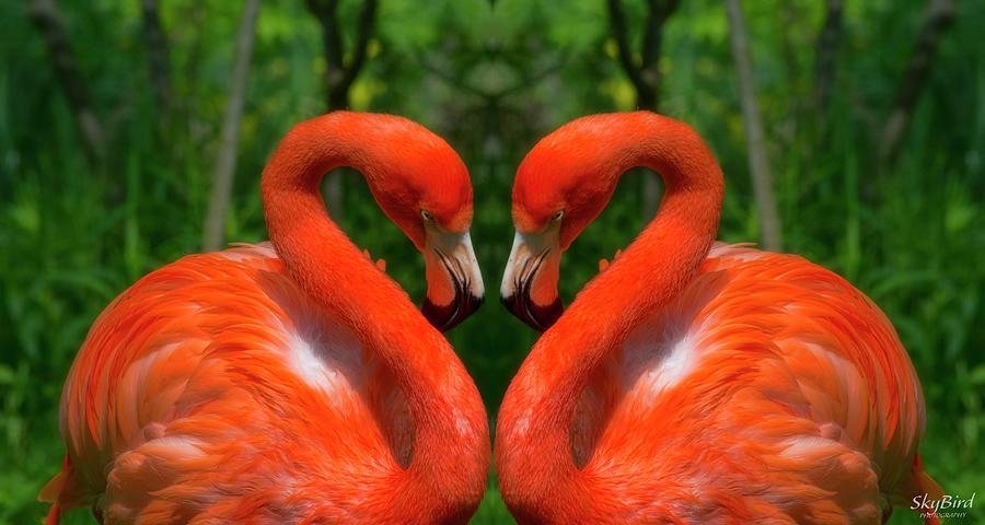 Mirrored Photograph