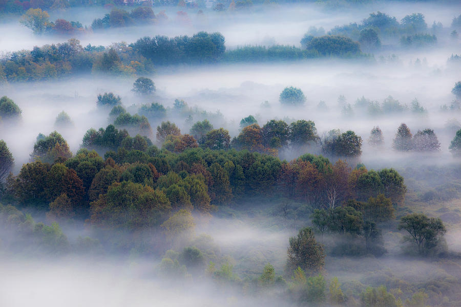 Mist in the morning  by Pietro Ebner