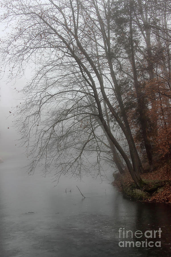 Winter Photograph - Misty Morning Mood by Karen Adams
