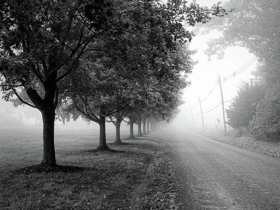 Misty Road Bw Photograph