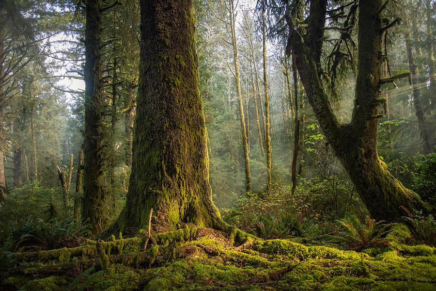 Misty Sentinel by Bill Posner
