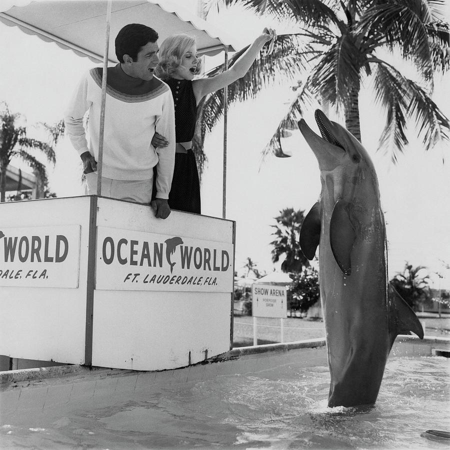 Models Feeding a Dolphin at Ocean World Photograph by Zachary Freyman