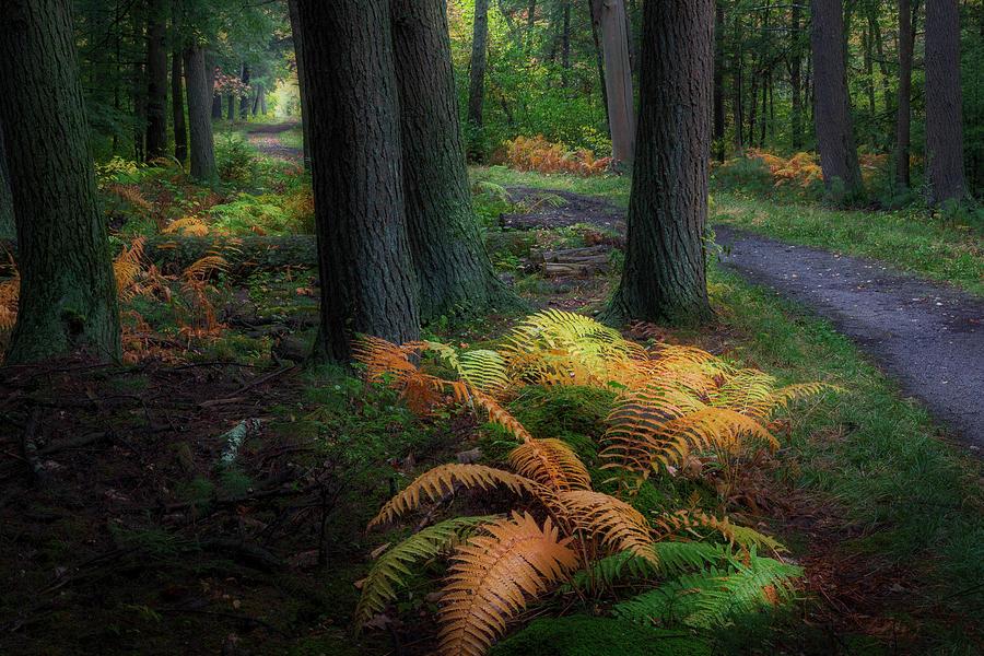 Mohawk Trail by Bill Wakeley