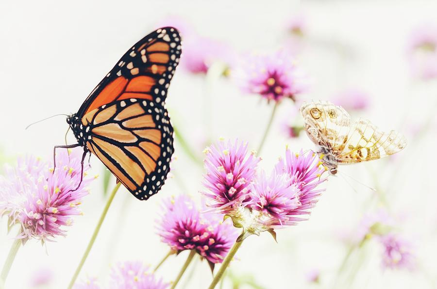 Monarch and Friend by Shannon Kelly