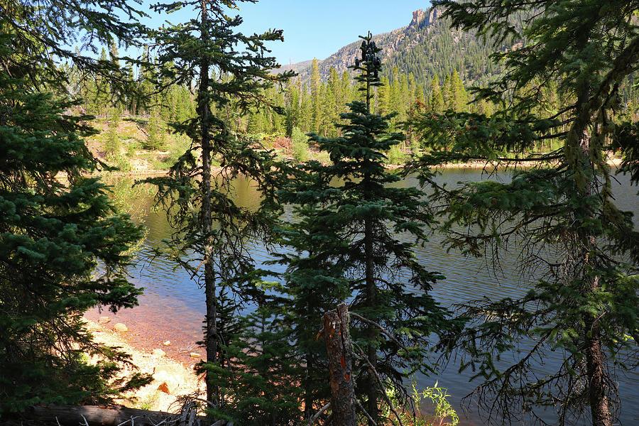 Monarch Lake Through The Trees Photograph