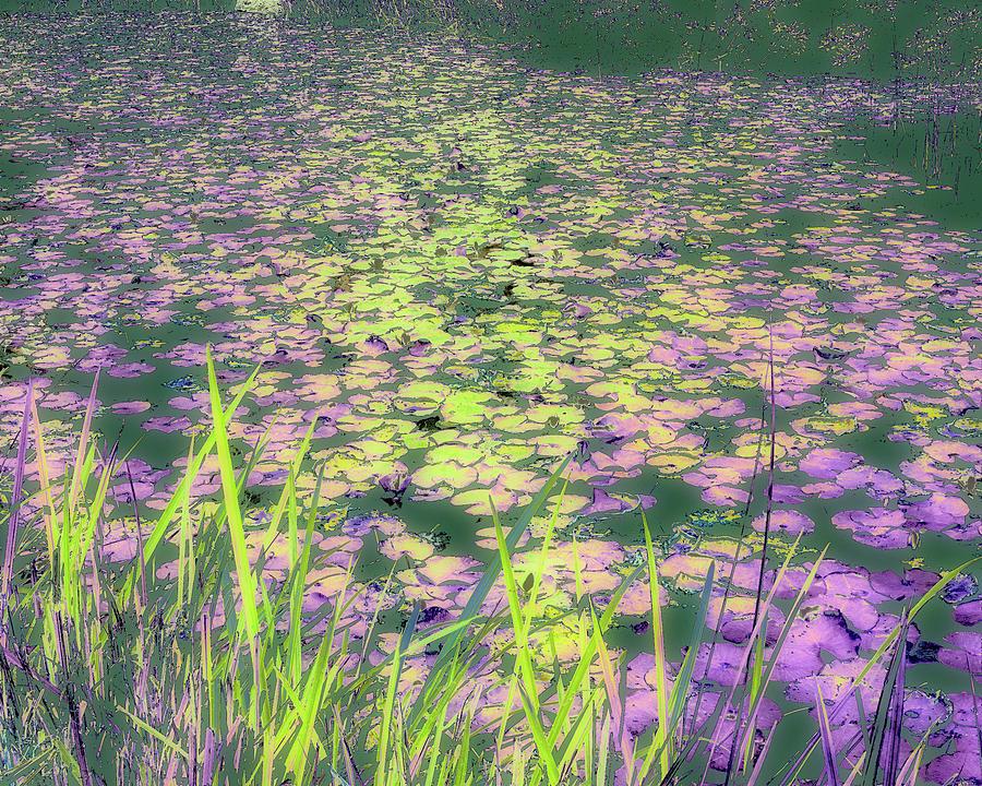 Photograph Photograph - Monets Garden by Joanne Mason