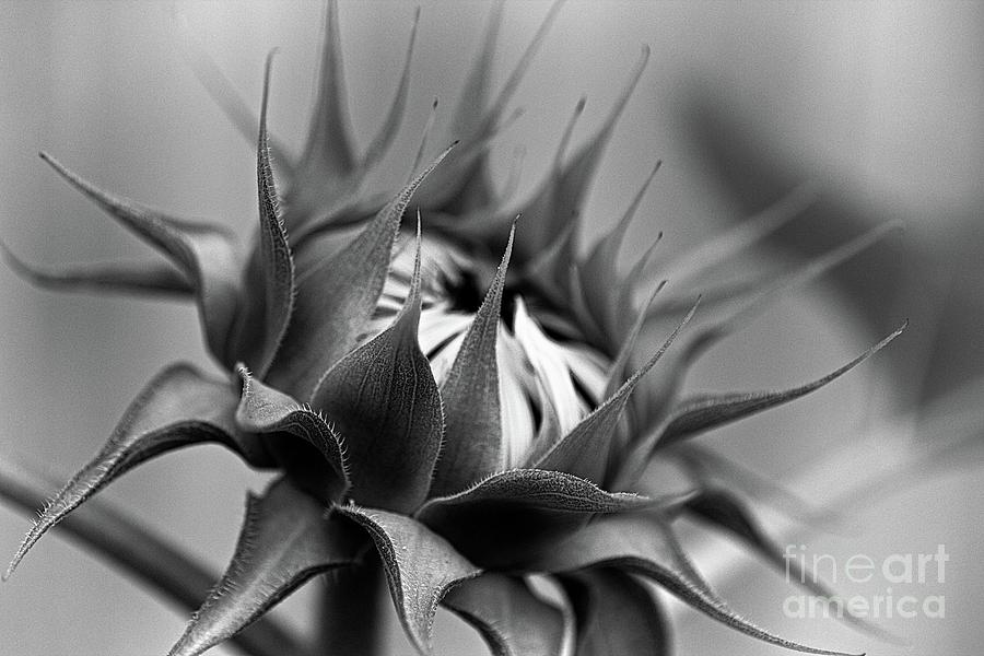 monochrome 564 by Fine art photographer Julie