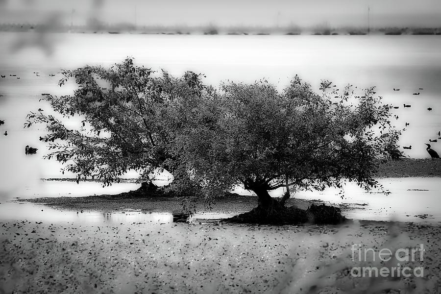 monochrome 727 by Fine art photographer Julie