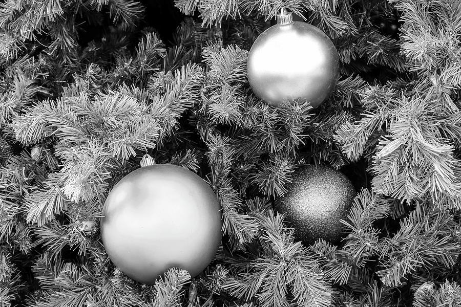 Monochrome Christmas Tree Close Up by Robert Wilder Jr