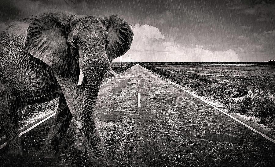 Monsoon by Susan Maxwell Schmidt