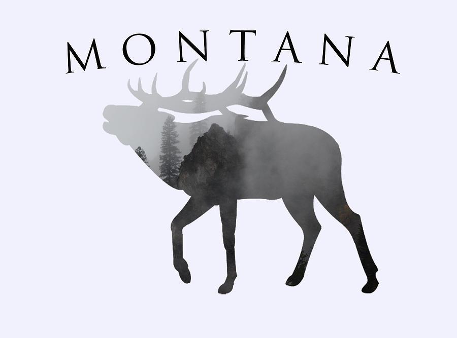 Montana Elk- Mysty Mountains Photograph