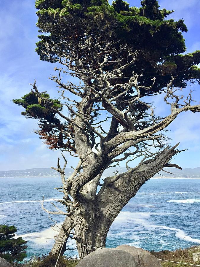 Monterey Peninsula Point Lobos Photograph