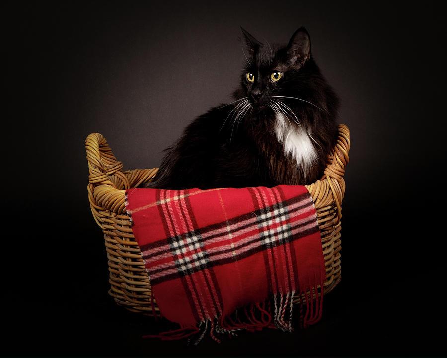 Mooch In Basket 2 Photograph