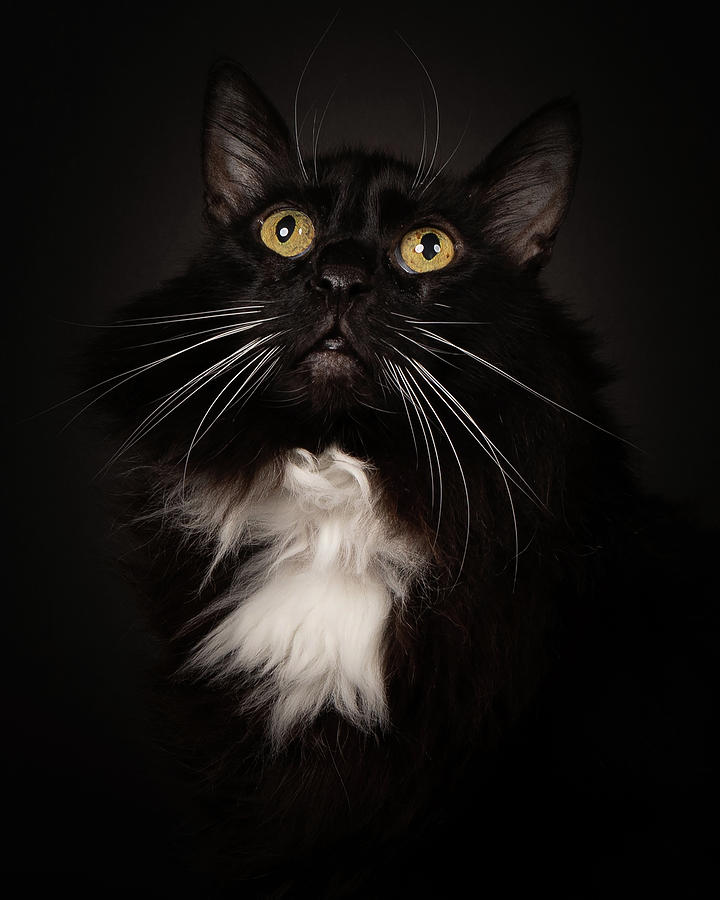 Mooch Portrait Photograph