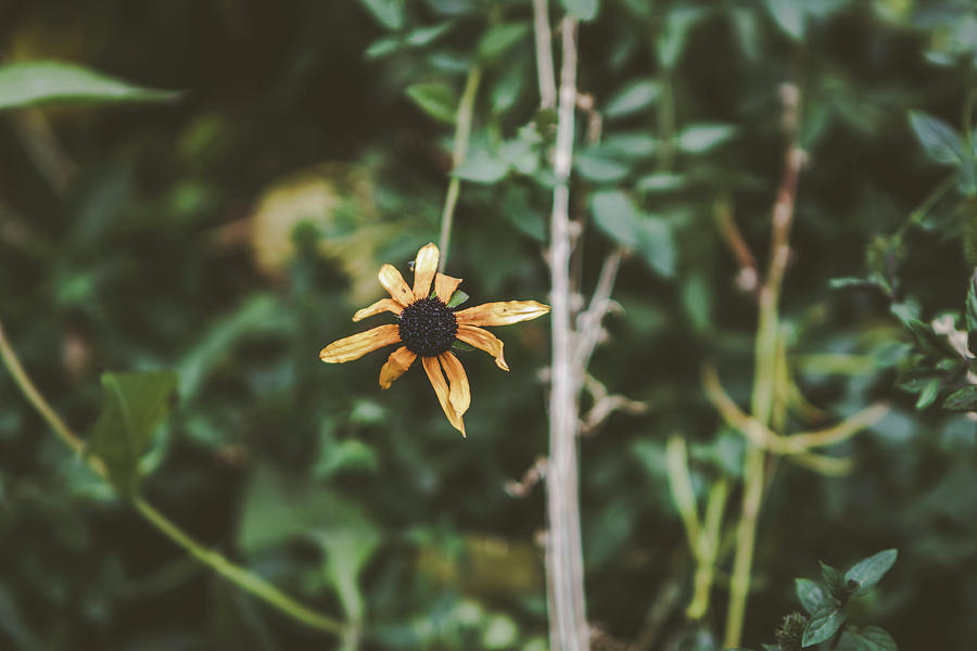 Nature Photograph - Moody flower by Kamie Stephen