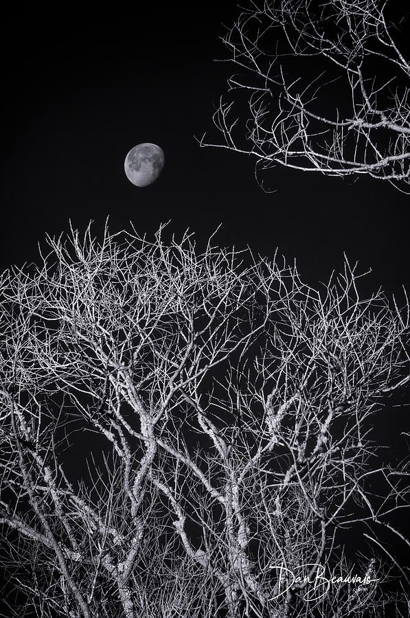 Moon And Bare Trees 6957 Photograph