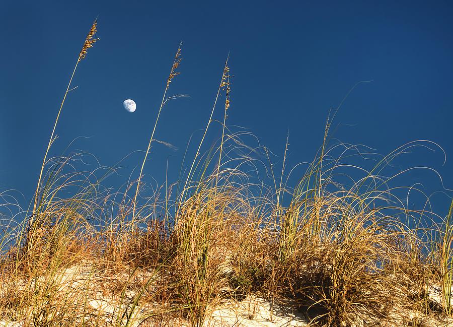 Moon through Sea Oats by Bill Chambers