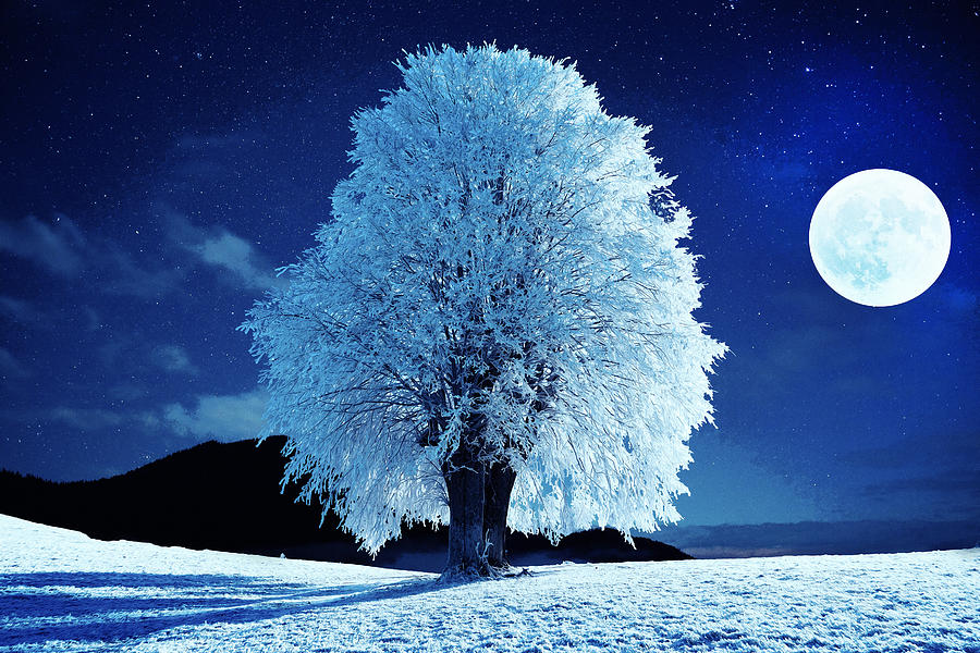 Moonlit Night Photograph - Moonlit Winter Night by Alex Mir