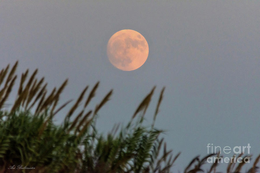 Moonrise in the field by Arik Baltinester