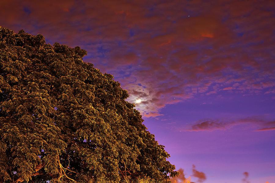 Moonrise over tree by Trinidad Dreamscape
