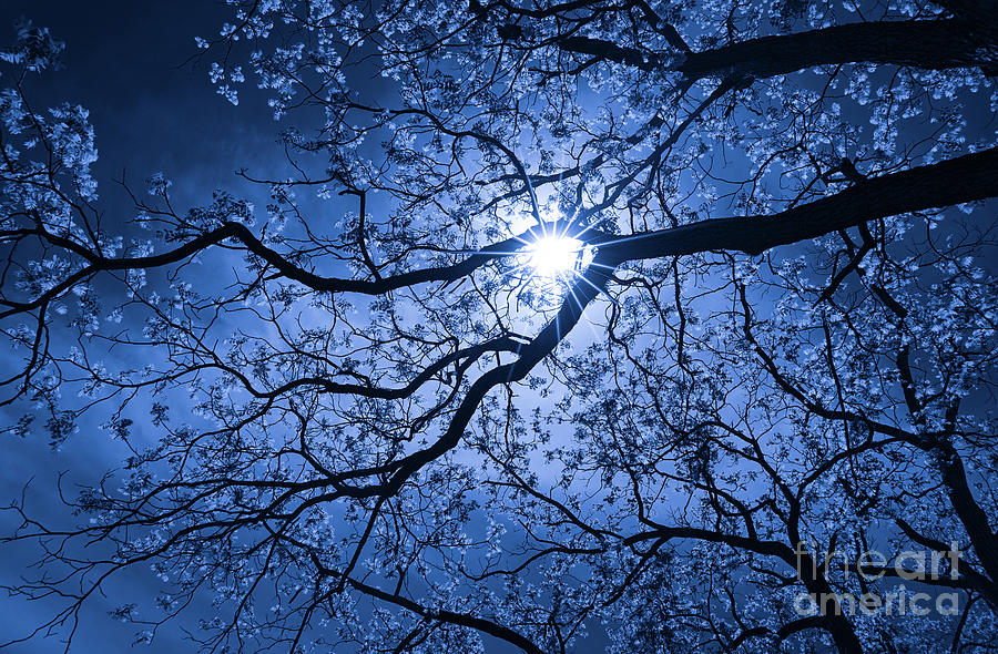 Moonshine In Blue Photograph