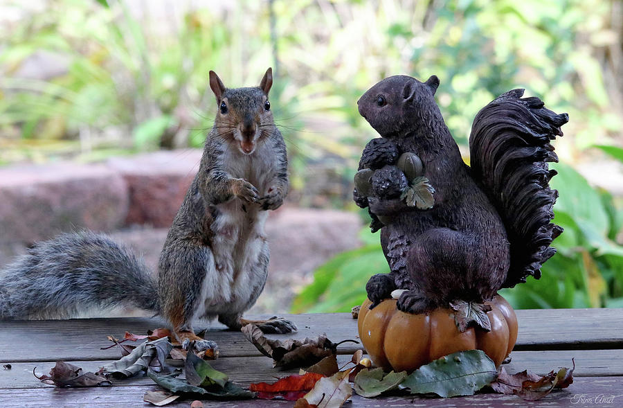 More Nuts Please by Trina Ansel