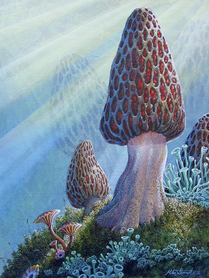 Morel Mushroom by Mike Stinnett