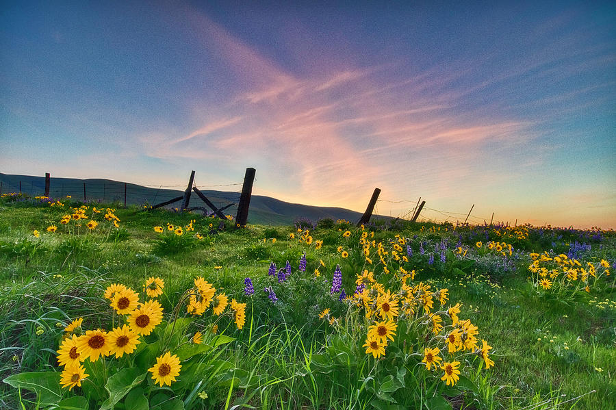 Morning Bloom by Harold Carlson