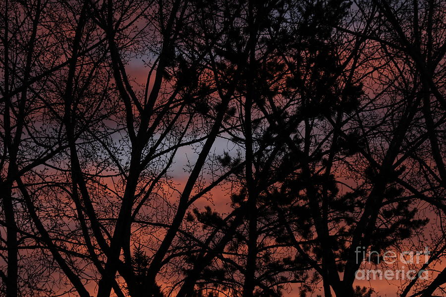 Morning Blue by Ann E Robson