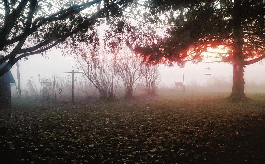 Morning Deer in Garden by Lars Lentz