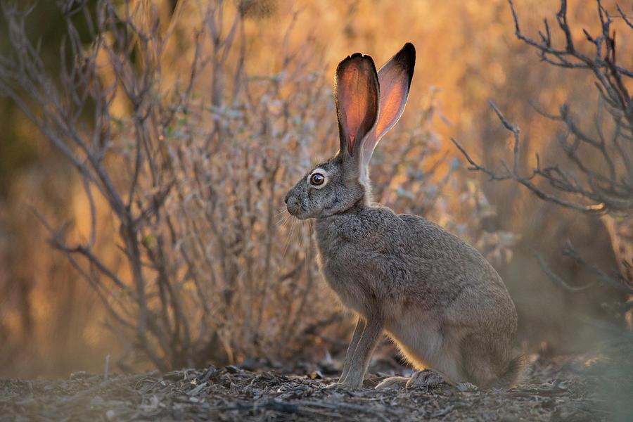 Morning Desert Life by Sue Cullumber
