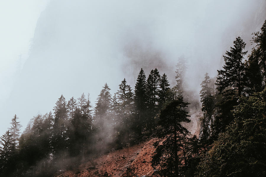 Morning Fog In Gesause National Park Photograph