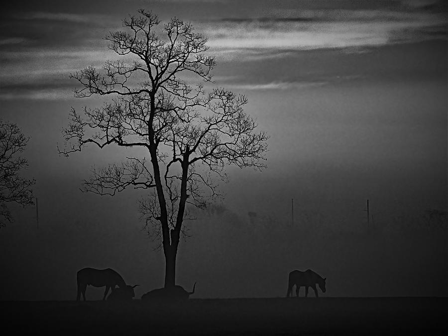 Morning Fog Photograph