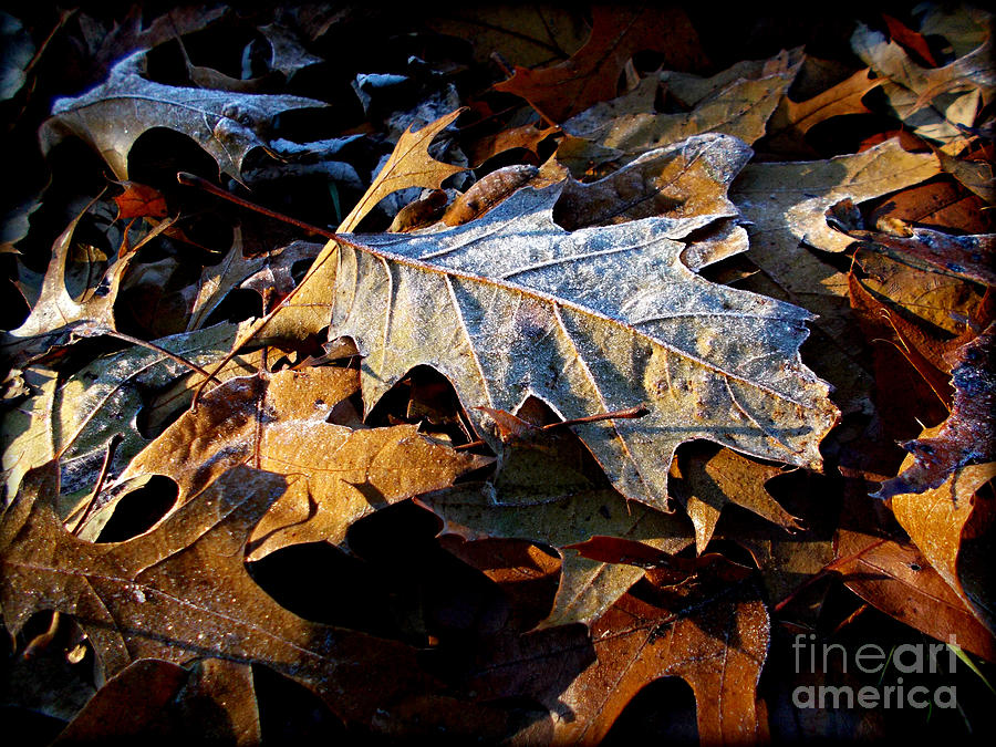 Nature Photograph - Morning Frost Autumn Leaves by Frank J Casella
