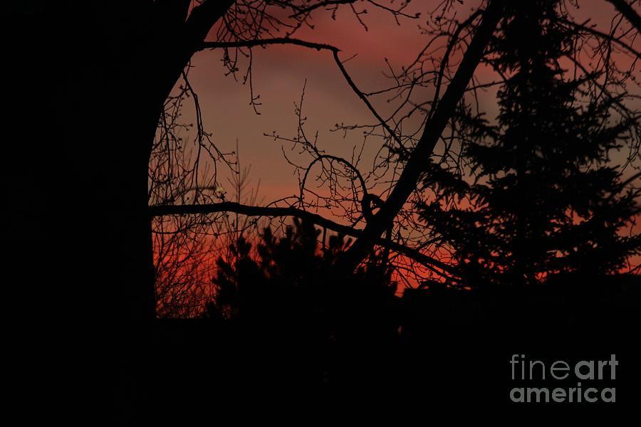 Morning Glory by Ann E Robson