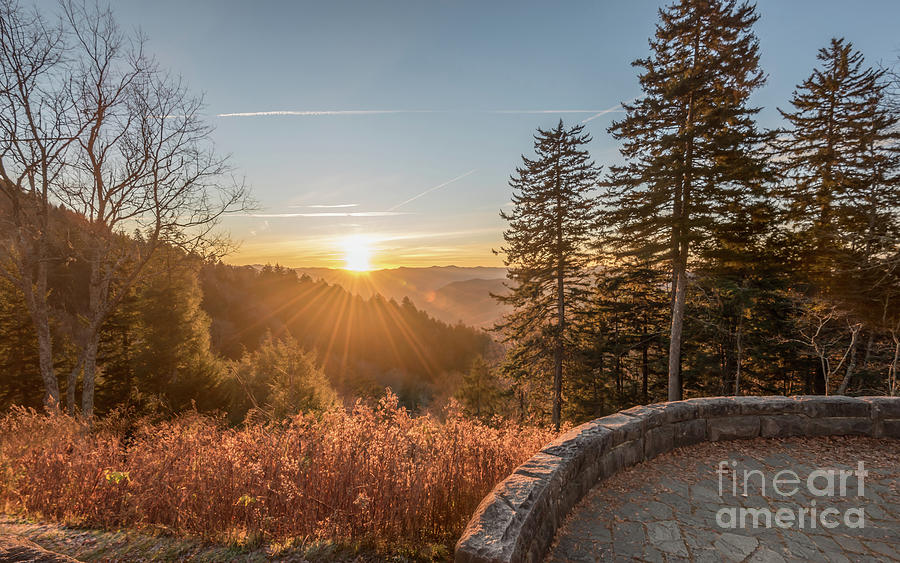 Morning Glory by DHEERAJ MUTHA