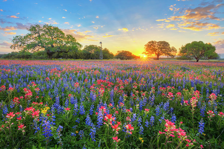Morning Glory Of Spring Texas Wildflowers 3192 Photograph