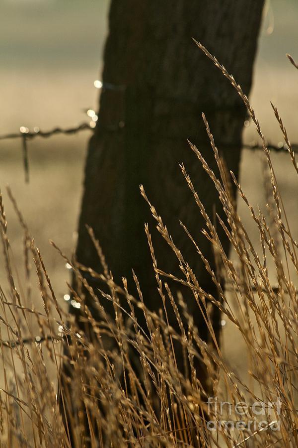 Morning Grass by Ann E Robson