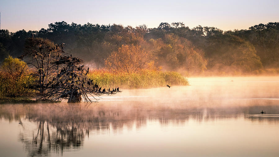 Morning In The Swamp Photograph
