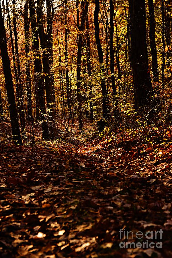 Morning Light in Autumn by Larry Ricker
