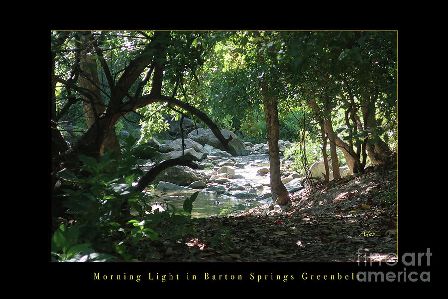 Morning Light In Barton Springs Greenbelt, Austin Poster Photograph