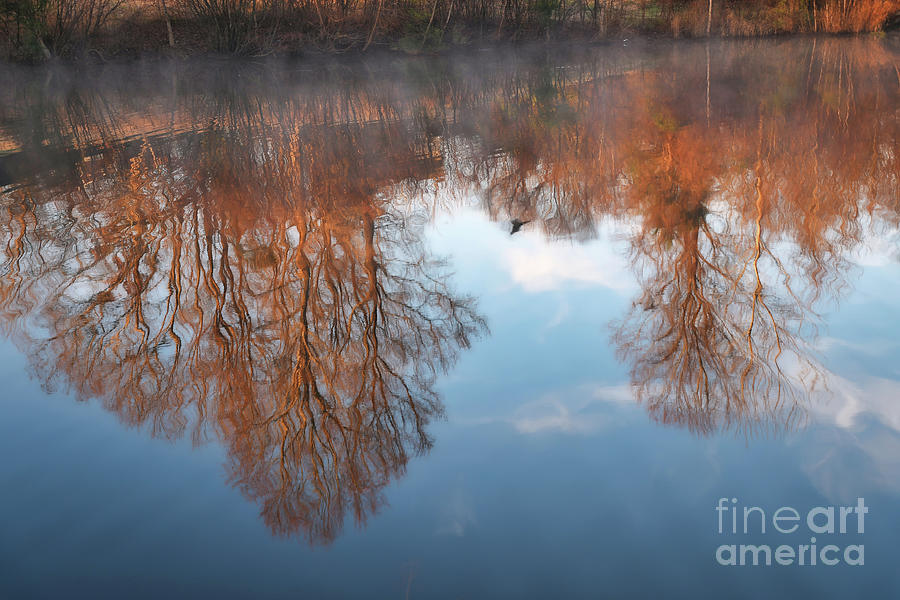 Morning Mist by Amy Dundon