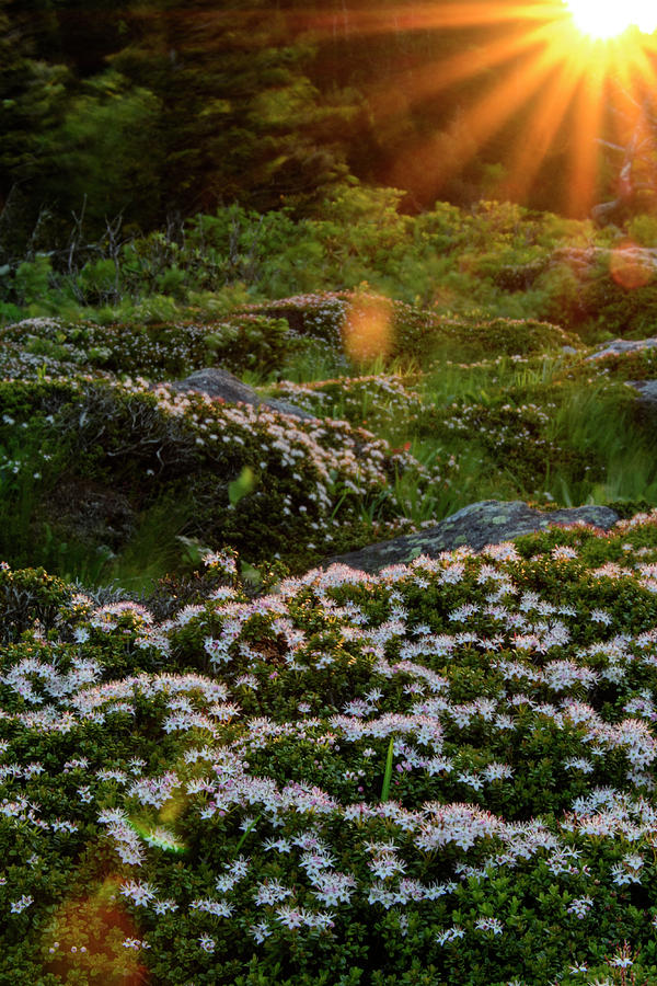 Blue Ridge Mountains Photograph - Morning Rays by Melissa Southern